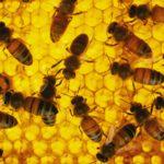 Мед и медолечение. Часть 1.