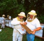 Мед и медолечение. Часть 4.